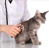 Ветеринарные клиники в Петровске